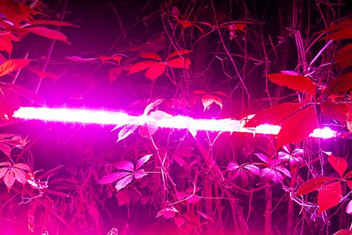 свет фитолампы led фитосветильники диодная подсветка растений