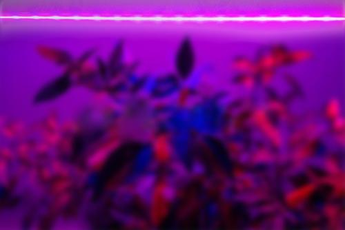 фитолампа 120 см фитосветильник 120 для растений купить минск