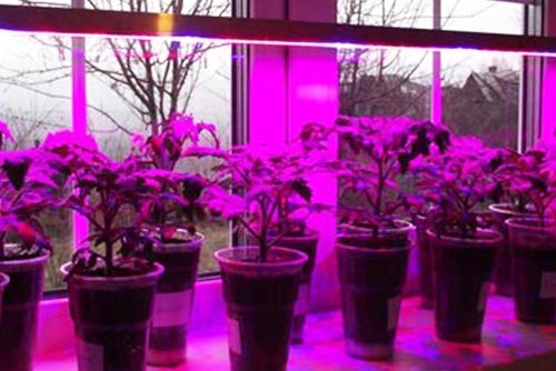 купить фитолампы фитосветильник 50 см полметра фито освещение растений