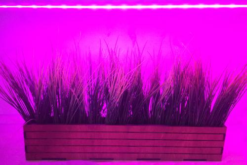 фитолампа 70 фитосветильники 70см купить освещение для растений и рассады
