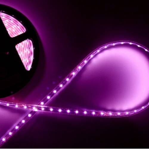 Светодиодная лента пурпурного свечения 3528, IP33 (120 диодов на метр)